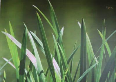 Gras/pink breit (80x60)