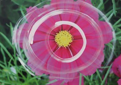 Pinke Blume _Spirale weiss (60x80