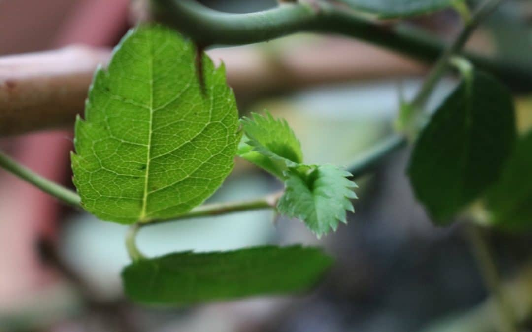 Grüne Triebe