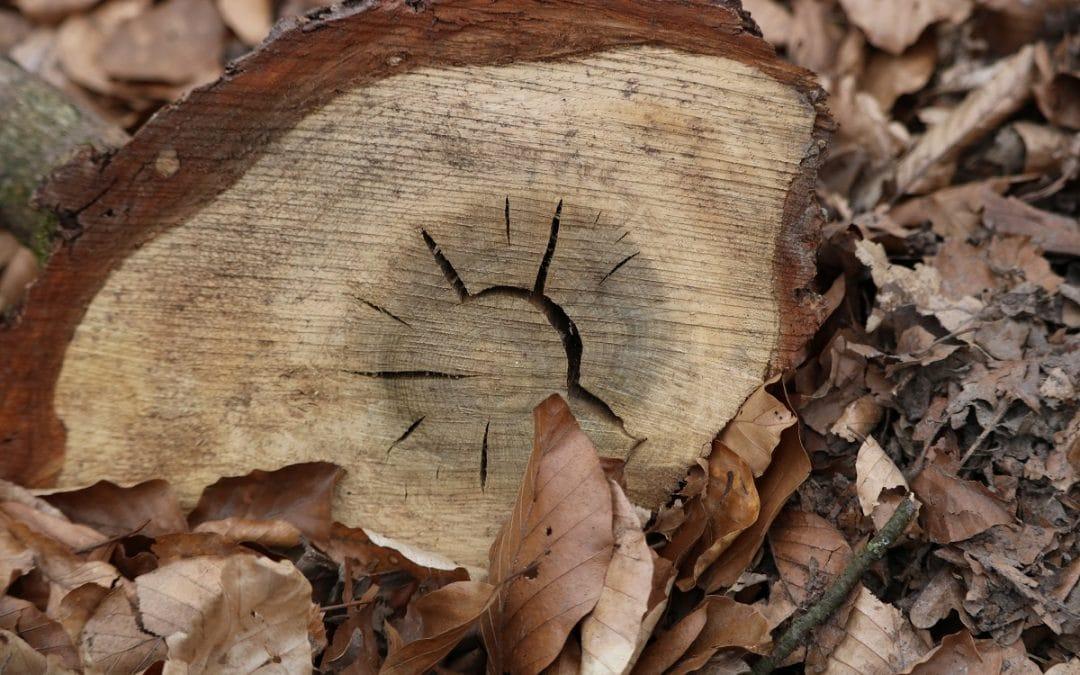 Ein Holzstück
